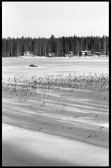 Finland (march '17) (Pietro Bevilacqua) Tags: landscape finland frozen lake filmisnotdead filmphotography filmscan believeinfilm grainisgood snow winter europe travel monochrome shadow fomapan agfa r09 one shot pentax k1000 selfdeveloped darkroom analogue 35mmfilm 50mm forest