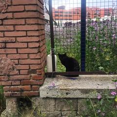 Gato negro bajo la lluvia (Nebelang) Tags: instagramapp instagram rainyday dialluvioso undertherain rain bajolalluvia lluvia noir chat cat black negro gato
