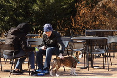 Dog Days '18, Morton Arboretum. 10 (EOS) (Mega-Magpie) Tags: canon eos 60d outdoors people person man dude guy fella dog pet puppy the morton arboretum lisle il illinois usa dupage america