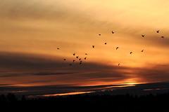 Lake Vatia_2018_04_23_0022 (FarmerJohnn) Tags: sunset auringonlasku punainen taivas red sky evening iltataivas taivaanranta pilvet clouds colors colorful värikäs kevät spring huhtikuu april suomi finland laukaa vatia vatianjärvi canon7d canonef70200l40isusm canon 7d juhanianttonen