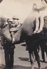Camel Rides at the Zoo 1930's (Bury Gardener) Tags: blackandwhite bw oldies old snaps scans people folks 1930s england uk british britain