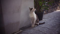 Lookin' Up (Shane Hebzynski) Tags: bangkok thailand cat street outdoors