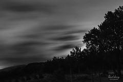 _MG_9133 - e bn t (Daniel Jiménez Fotógrafo) Tags: bn blackandwhite blancoynegro landscape paisaje nocturno night noche estrella cielo sky nube largaexposicion tree arbol españa spain photographer photo photography photoftheday danifotografia danieljg danieljimenezfotowixcomportfolio