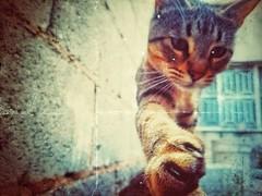 ○●PIKA●○ (ivethmendez86) Tags: pet cat gato bebe baby textures beauty beautiful kawaiii cute vsco love amor cool shoot