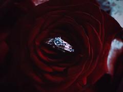 ○● Con la puerta abierta nadie se va, la manera más refinada de amar es la libertad.●○ (ivethmendez86) Tags: flor rosa flower rose red anillo compromiso beautiful amor love macro magic vsco photooftheday fantasy nice cute ring