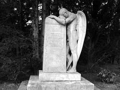 Zu Christi Himmelfahrt  ein männlicher Engel-gibts auch (sabine1955) Tags: engel angel friedhof cemeterie skulptur