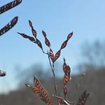 Seedpods thumbnail