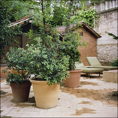 H10 Garden - Barcelona (magnus.joensson) Tags: spain barcelona h10 casa mimosa april sailing the mediterranean rolleiflex 35 carl zeiss tessar 75mm kodak porta 400 c41 6x6 medium format garden