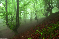 The enchanted forest (Hector Prada) Tags: spring forest fog leaves leaf moss mood woods primavera bosque niebla hojas musgo atmósfera enchanted encantado creepy nature naturaleza paísvasco basquecountry