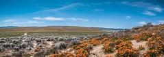 Antelope Valley (Carolina Hahn) Tags: kalifornien california np nature usa landscape landschaft