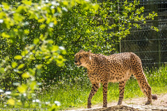 Chester Zoo May 2018 (Phil Longfoot Photography) Tags: zoo animals animal giraffes wildlife monkeys chester cheshire tourism day out zebra zebras rhinos rhino ape