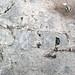 Fossiliferous limestone (Columbus Limestone, Middle Devonian; Sullivant Quarry, Columbus, Ohio, USA) 93