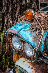 Lost All Feeling (Wayne Stadler Photography) Tags: abandoned preserved junkyard georgia classic automotive derelict overgrown vehiclesrust rusty retro vintage oldcarcity rustographer rustography white