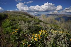 DSC00844 (kyleddsn) Tags: hiking utah ogden spring