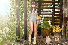 Daisy (Bishybaby) Tags: candydoll collabor88 wasabi pumec cosmopolitan equal10 birdy cj moonelixir moonamore disorderly maitreya suicidalunborn whimsical warpaint