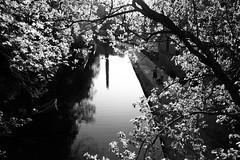 Hebden Bridge, Rochdale Canal May 2018 (Richard Needham) Tags: calderdale canal caldervalley blackandwhite reflection