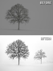 Before After - Trees - Ben Heine Photography (Ben Heine) Tags: beforeafter benheinephotography photography nature landscape before after photoediting editing retouching photoretouching objectremoval colorcorrection photocorrection composition restoration photorestoration masking clippingpath clipping mattepainting retouche retouchephoto photographie foto fotografie