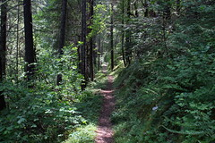 Just a beautiful trail (rozoneill) Tags: taylor creek trail rogue river siskiyou national forest briggs galice grants pass oregon hiking