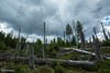 After Storm (3429) (Stefan Beckhusen) Tags: oderteich harz germany stormdamage harzmountainrange forest woodland wood trees nature landscape outdoors hiking color day summer tree trunks
