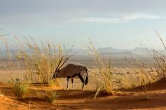 IMG_8413 (tregnier) Tags: namibia roadtrip africa travel desert animals sossusvlei leopard cheetah lion solitaire trip