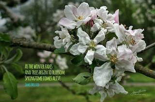 122/365 - Daily Haiku: Springtime