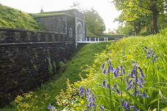 20180515_Crownhill Fort (Damien Walmsley) Tags: bluebells crownhillfort thelandmarktrust plymouth england morning sun