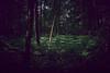 Enlightened forest (PascallacsaP) Tags: deep green forest wood tree trees ferns spring springtime sunlight enlightened sunlit voeren limburg belgium belgië walk hike treetrunks canopy leaves lighting epen netherlands woods fujifilm x100f vignetting shadow shade dark light border borderland