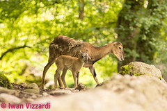 Tierpark Goldau (6 von 6) (1973RoadRunner) Tags: natur nature tiere animals tierpark goldau