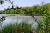 Wetlands (fotofish64) Tags: nature naturepreserve wetland water color green flora cliftonpark saratogacounty capitaldistrict newyork outdoor vischerferrynaturehistoricpreserve park vintagelens primelens pentax pentaxart k70 kmount 35mm smcpentaxk35mmf35