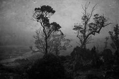 IMG_0586-Edit.jpg (silvia leaf) Tags: cradlemountain eagles mist road