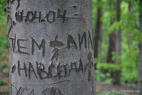 Ботанічний сад імені Гришка Буковий гай InterNetri  Ukraine 097