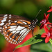 Butterfly House (tanyalee_84) Tags: