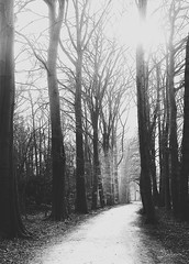 February forest (-Ebelien-) Tags: atmosphere sfeer path pad trees bomen winter ebelien 2018 february forest februari bos zwartwit blackandwhite
