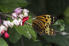 Papallona, _DSC8611_NKD500_C.E. jpg (Francesc //*//) Tags: mariposa papallona natura naturaleza nature papillon butterfly animal insecte insecto insect macro macrofotografia