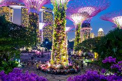 Giant Flowers (skweeky ツ) Tags: singapore singapour supertree grove garden bay flower giant marina sands night blue hour long exposure