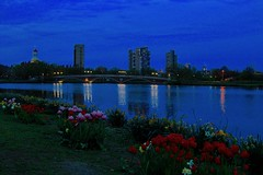 Spring flowers at blue hour (ole_G) Tags:
