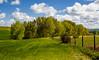 Verdear (Agustina Santervás) Tags: agustina verdear luz verdes primavera