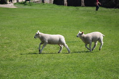 IMG_9129 (Lady Science) Tags: yorkshiresculpturepark
