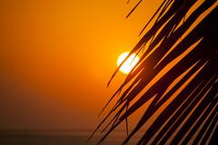 Sunet Over Cherai Beach, Kerala, India (Steve Weaver) Tags: cherai beach kerala india sun sunset golden sky orb palms sea arabian orange