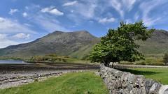 The Windy Tree.. (Harleynik Rides Again.) Tags: corran lochhourn glenelg highlands westcoast westerross scotland tree nikond810 harleynikridesagain