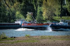 Wettrennen auf dem Rhein (M_Nix) Tags: nrw düsseldorf urdenbach kempen rhein überschwemmungsgebiet ufer wasser bäume vögel schiffe wettrennen