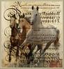 Brown and white (jaci XIII) Tags: cavalos texto textura animal horses texture text