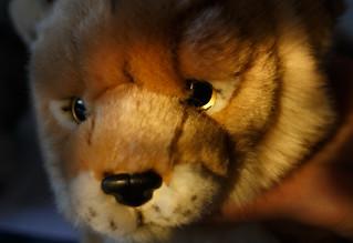 Snow Leopard's Eye