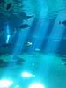 Maui Aquarium (PDX Bailey) Tags: blue maui hawaii acquarium fish reflecting light scuba