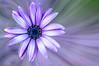 _DSC7997 (Guy_D_2018) Tags: plougrescant bretagne france цветок lule blumen ծաղիկ кветка цвете 花 flower 꽃 cvijet blomst flor lill kukka blodyn ყვავილების λουλούδι virág bunga bláth blóm fiore zieds gėlė цвет voninkazo fjura फूल bloem ਫੁੱਲ gul گل kwiat floare kvetina cvet blomma květina ดอกไม้ çiçek квітка hoa בלום زهرة nikon d90