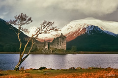 Lone Tree - 2018-02-17th, Industar 22, 50mm, Kilchurn Castle, ND4 filter, 1-125th, f16 (colin.mair) Tags: 1964 35mm 50mm fuji industar22 kilchurn kilchurncastle leningrad4 lightmeter lochawe m39 russian tree ussr zorki6 f16 film200asa hills