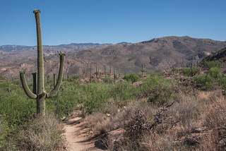 Along the Douglas Spring Trail
