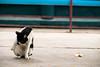 027 (studiofuntas) Tags: cat vientiane laos indochina temple animal straycat backstreet studiofuntas funtas holiday 犬写真家 猫写真家 猫写真 犬写真 動物写真 出張撮影 撮影 スタジオファンタス 地方遠征 portrait ポートレート kids写真 familyphoto kidsphoto couplephoto