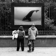 Whale (.sl.) Tags: mexico mexique streetphotography whale picture man women sidewalk exhibition photography street blackandwhite