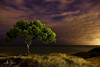 Cala de la Mallaeta (Villajoyosa, Spain 2011) (Alex Stoen) Tags: 121523411 204365 5dmk2 alexstoen alexstoenphotography alicante arbol beach caladelamallaeta canon canoneos5dmarkii carlosserrano cielo cloudy collection contaminacionluminica creativelighting ef24105f4lisusm estrellas flickr grass horizon horizonte lamallaeta largaexposicion lightpainting lightpollution longexposure mar medianoche mediterranean mediterraneo night noche noctambulo noctambulos nocturna nocturnal nubes nublado paz peace picasa picassa pino playa sea sky stars tiempo tranquilidad tranquility treasure tree villajoyosa facebook luzcreativa motion mouvement pintarconluz time